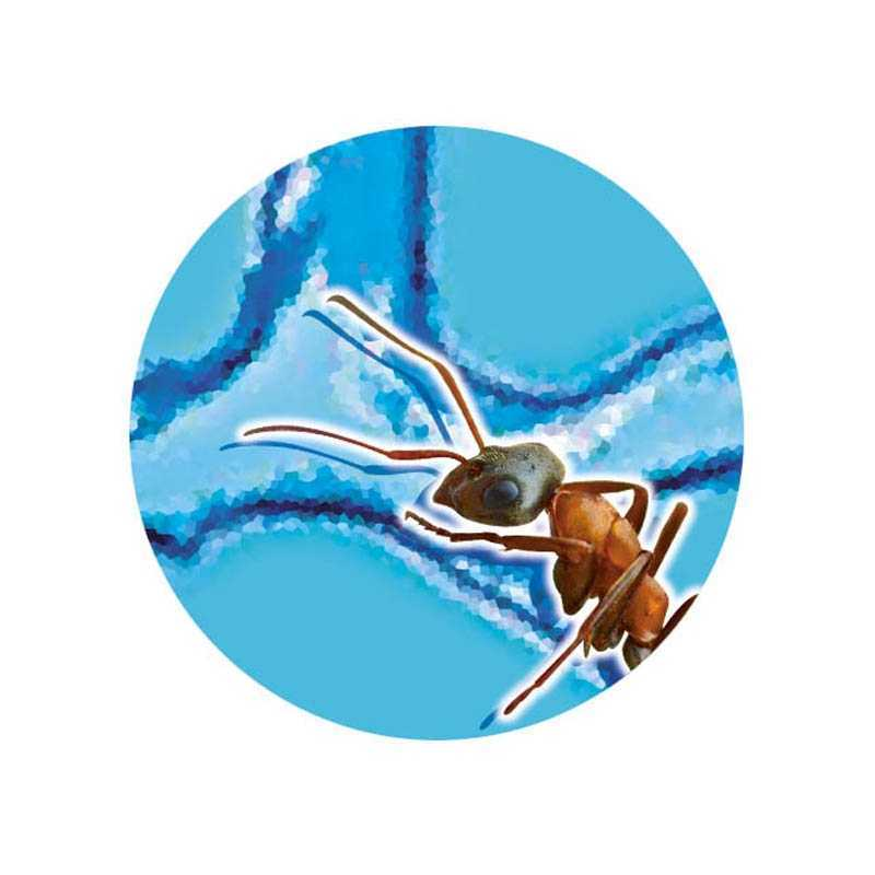 Mini monde des fourmis Buki